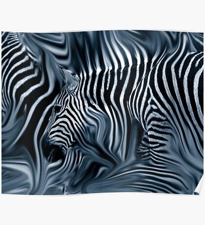 Knee Deep in Blue Zebras  Poster