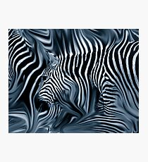 Knee Deep in Blue Zebras  Photographic Print