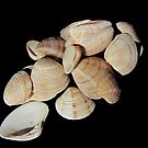 Seashells on black by flips99