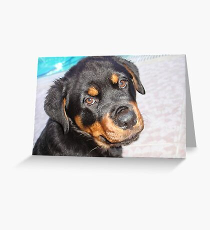 Female Rottweiler Puppy Making Eye Contact Greeting Card