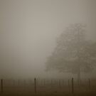 Inside a Fog-Sphere  by Stephen J  Dowdell