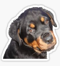 Female Rottweiler Puppy Making Eye Contact Vector  Sticker