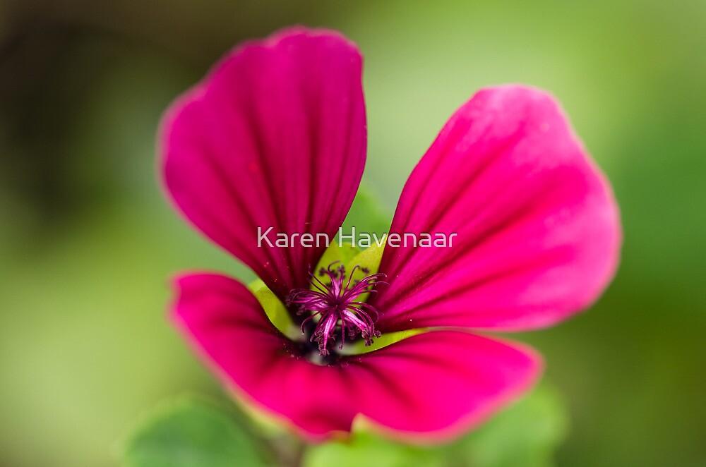 Pink on Green by Karen Havenaar