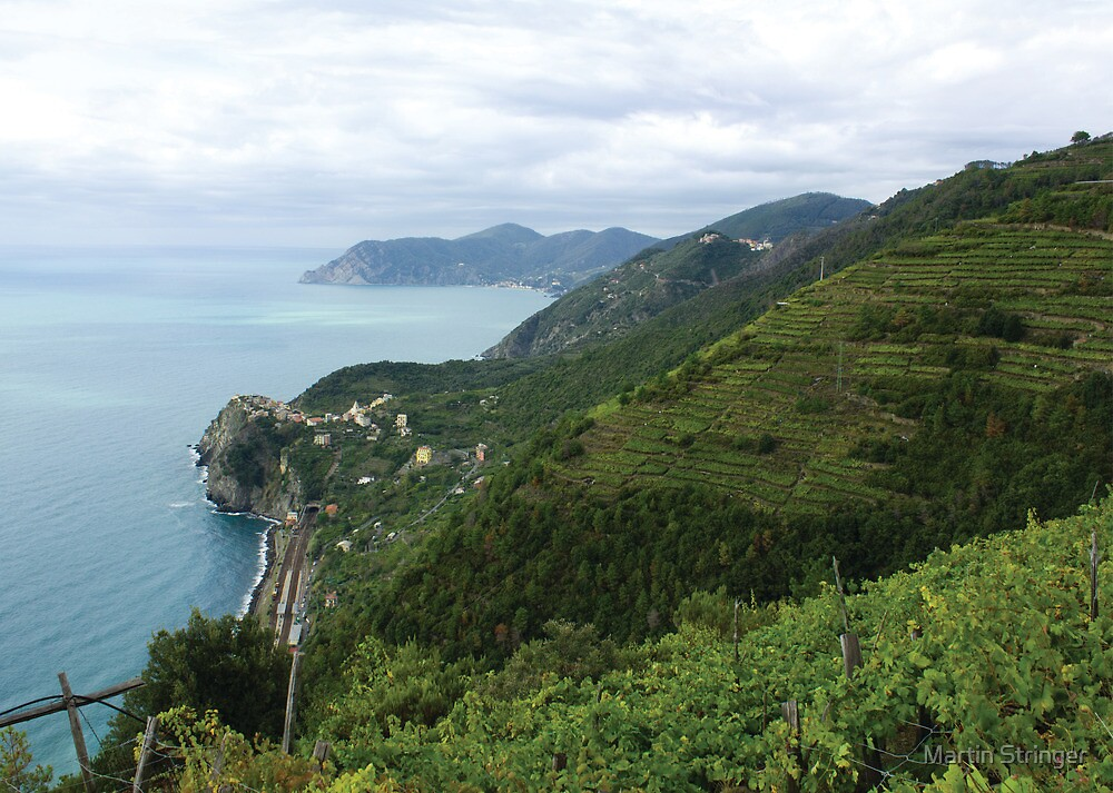 'Italian Vineyards' - Cinque Terre, Italy by Martin Stringer