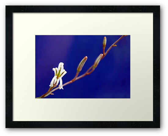 Small Aloe Flower by Michelle Ricketts