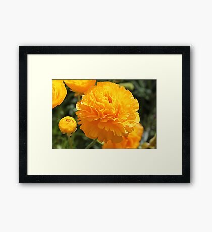 Sunshine in my life today... Framed Print
