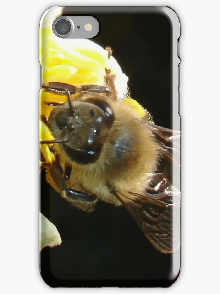 Honey Bee Pollinating Lemon Flower Close Up by taiche