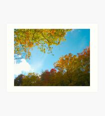 Filtered Autumn Art Print