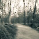 An abstract toned photograph - The Walk by MLabuda