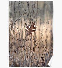 Fallen oak leaf Poster