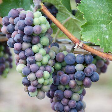 Niagara Grapes by bookermorgan