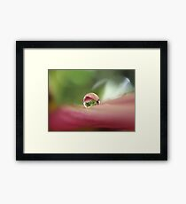 Sugar and Spice Framed Print