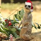 Merry Meerkat by Larry Costales