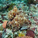 Day Octopus - Octopus cyanea by Andrew Trevor-Jones
