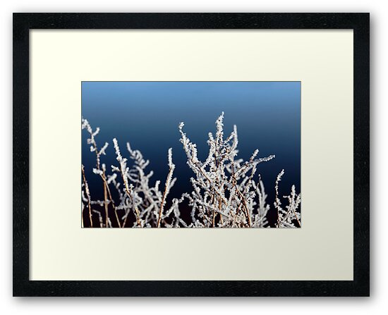icy twigs and branches in frosty snow against blue by morrbyte