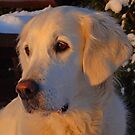 My golden girl by Trine