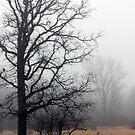 Oak Tree in a Misty Pasture by AbigailJoy