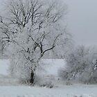 Snow Trees by Linda Miller Gesualdo
