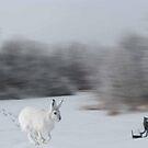 Snow Travler  by Linda Miller Gesualdo