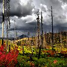 Way Up There by Charles & Patricia   Harkins ~ Picture Oregon