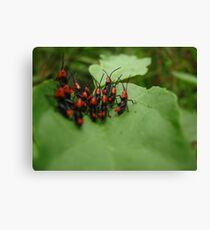 Small Hoppers Canvas Print