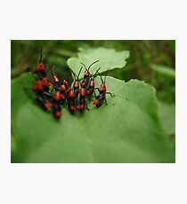 Small Hoppers Photographic Print