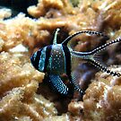 Exotique by Cow41087