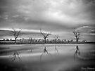 Tenindewa ~ 4 by Pene Stevens