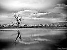 Tenindewa ~ 5 by Pene Stevens