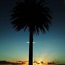 Palm Sunset by jlv-