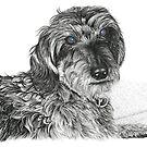 Schnell, Wire Haired Dachschund by Paul Stratton