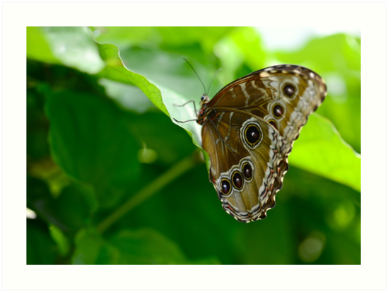 Butterfly Museum II by Ginadg73
