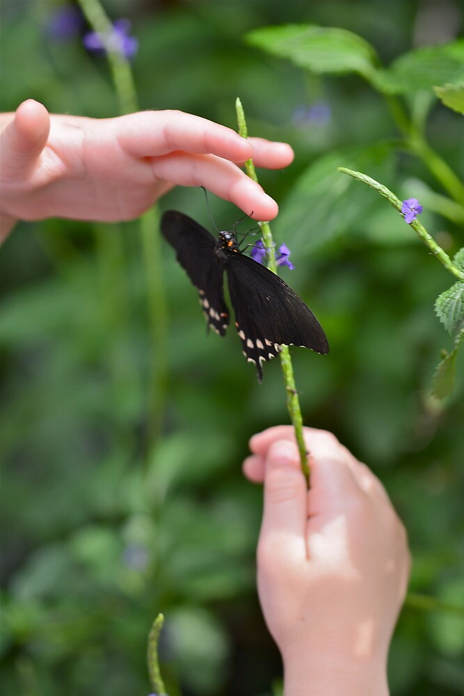 A Butterfly in the Hand I by Ginadg73