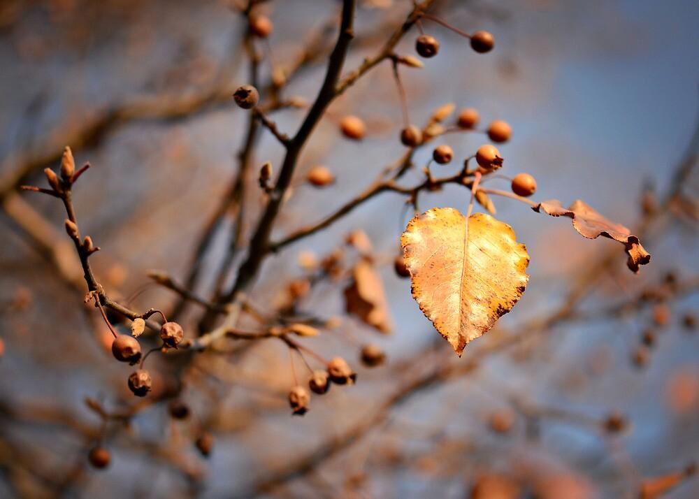 Goodbye Autumn by Ginadg73