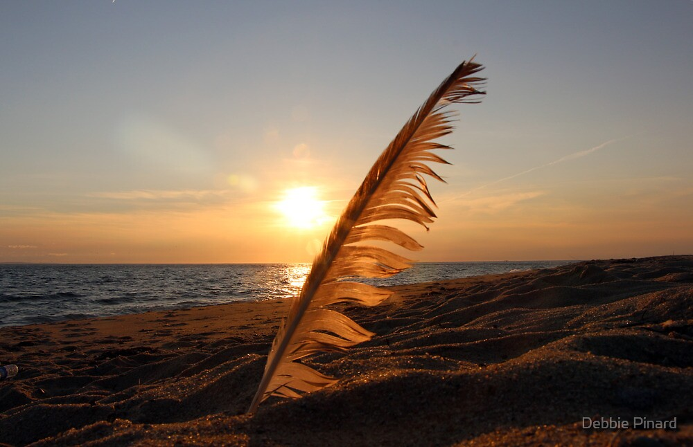 Feather in the Sand - Provincetown Massachusetts by Debbie Pinard