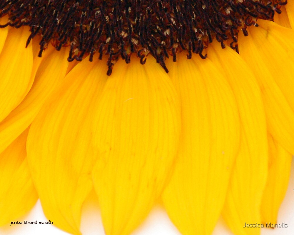 Sunflower Abstract by Jessica Manelis
