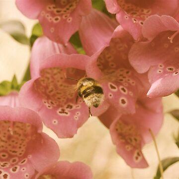 Bee Flying Towards A Foxglove by RH-prints