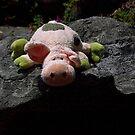Piggy on the edge.......! by Roy  Massicks