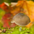 automn softy by Manon Boily