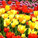 Floriade by JuliaKHarwood
