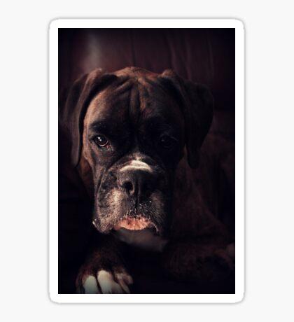 Porträt eines weiblichen Boxers - Boxer Dogs Series Sticker