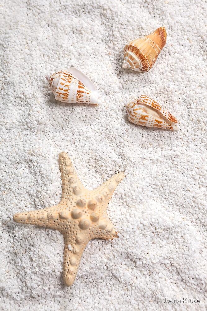 sea shells by Joana Kruse