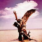 The Old Mangrove Tree by delosreyes75