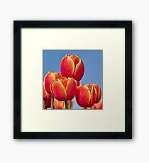 Tulips in the sky Framed Print