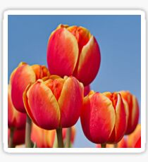 Tulips in the sky Sticker