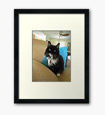 Gracie 01 Framed Print