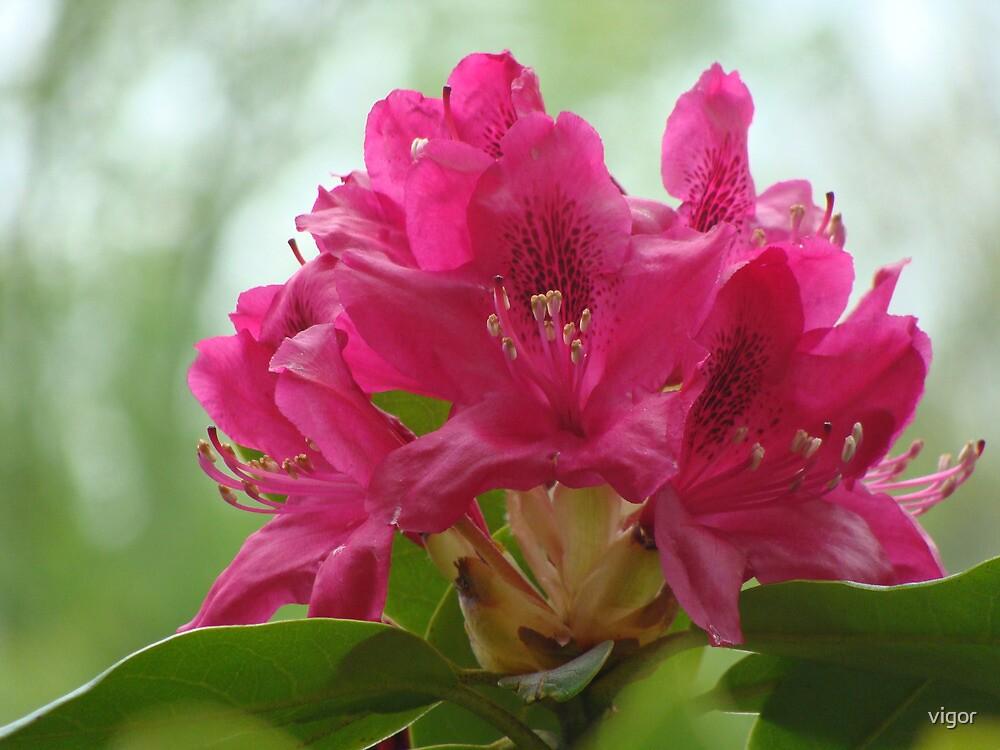 glorious spring by vigor