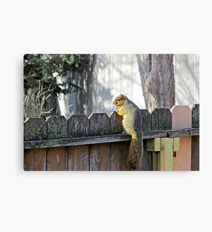 Curious Neighbor Canvas Print