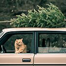 Volvo Christmas Cats by Ryan Conners