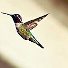 Humming Bird by Stephen Forbes
